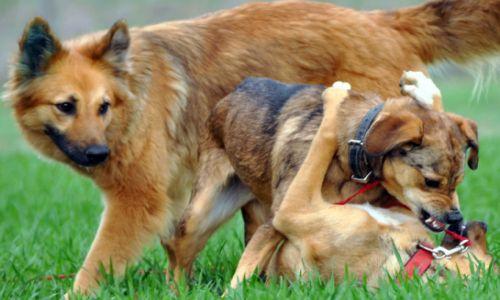 allergie hund